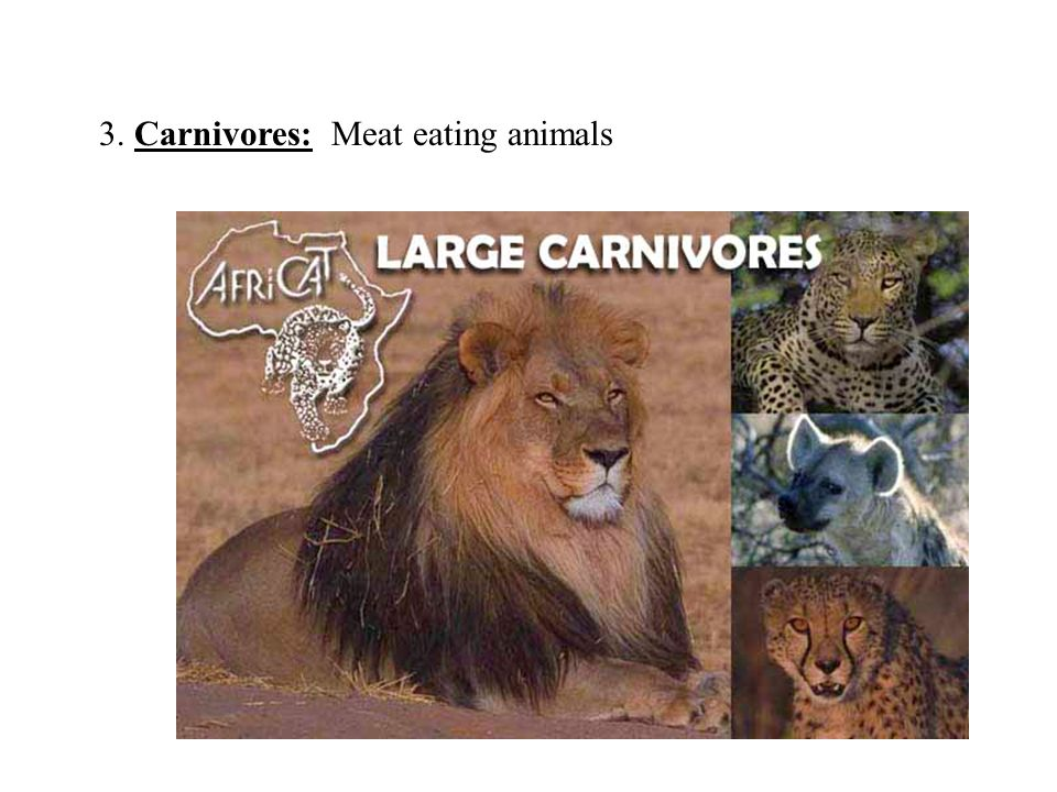 3. Carnivores: Meat eating animals