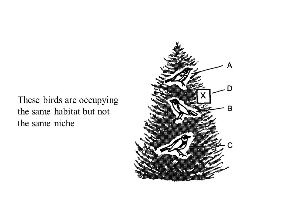 These birds are occupying the same habitat but not the same niche