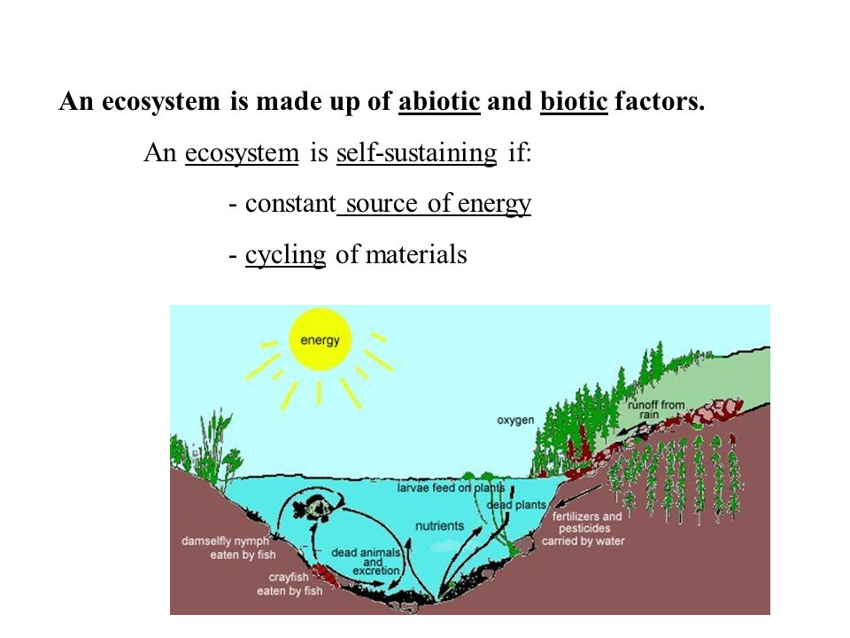 An ecosystem is made up of abiotic and biotic factors.