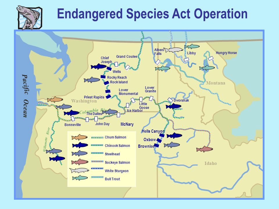 Endangered Species Act Operation