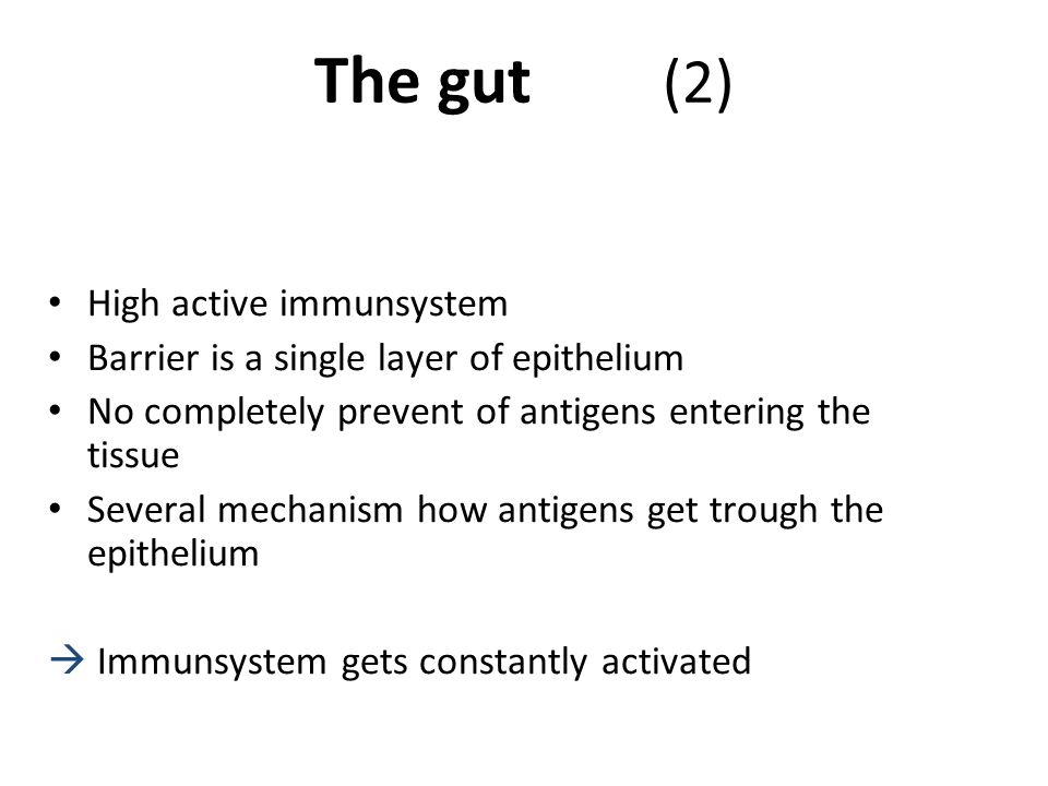 The gut (2) High active immunsystem