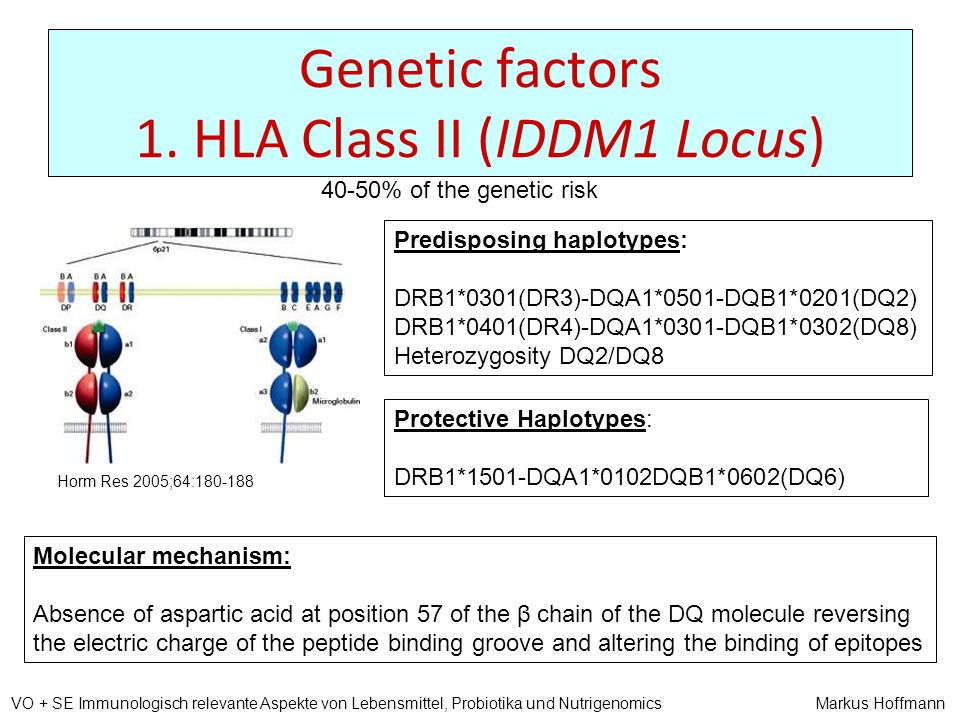 Genetic factors 1. HLA Class II (IDDM1 Locus)