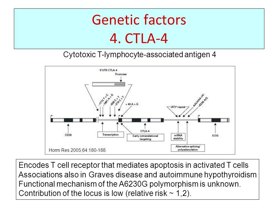Genetic factors 4. CTLA-4 Cytotoxic T-lymphocyte-associated antigen 4