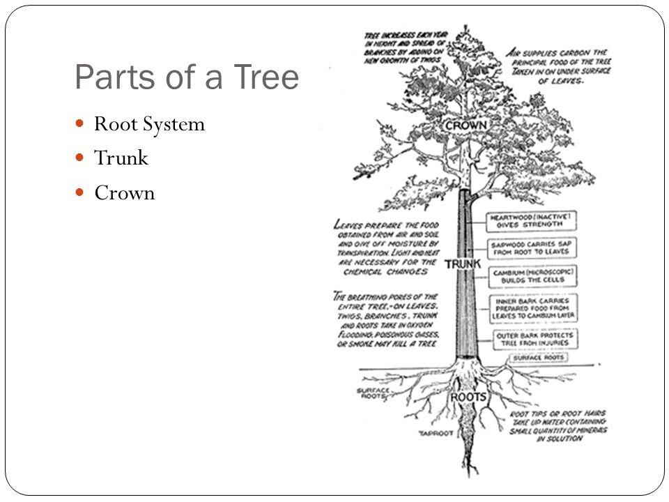 diagram root tree trunk diagram wiring diagram schematic circuit rh 91 schematic wasserwacht wb de Inner