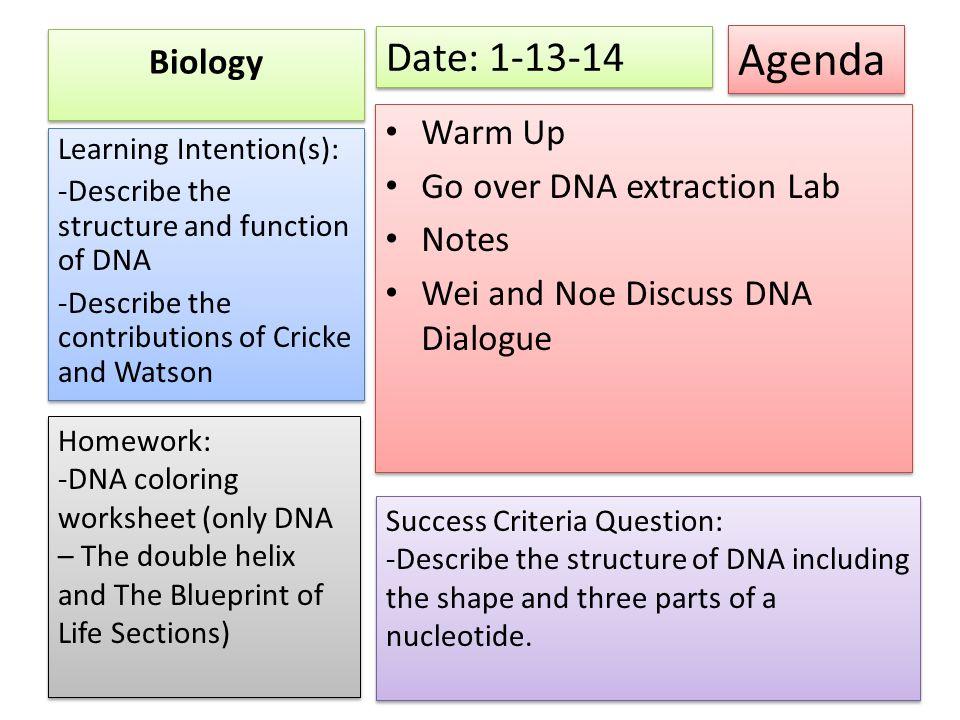 Agenda date biology warm up translation notes ppt video online agenda date 1 13 14 biology warm up go over dna extraction lab malvernweather Choice Image