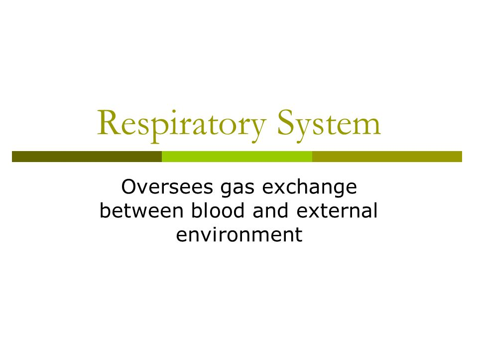 Oversees gas exchange between blood and external environment