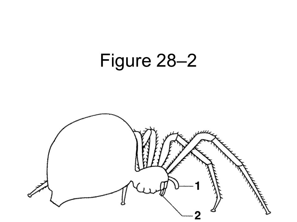 The Appendages Of Arthropods Are