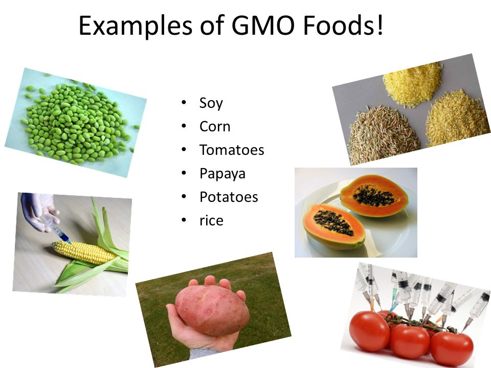 "eliminating genetically modified foods A number of observers have suggested that americans' limited familiarity with genetically modified foods suggests that people's opinions about gm are ""soft"" and, therefore, more likely to change over time and, potentially, to be sensitive to differences in survey question wording."