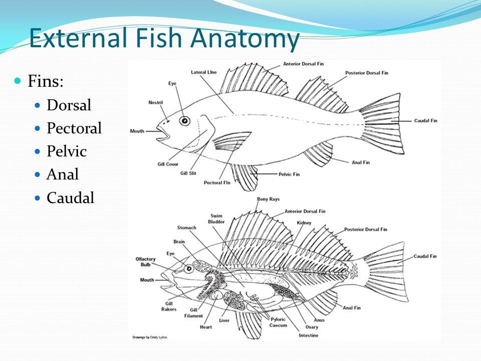 Fish. - ppt video online download