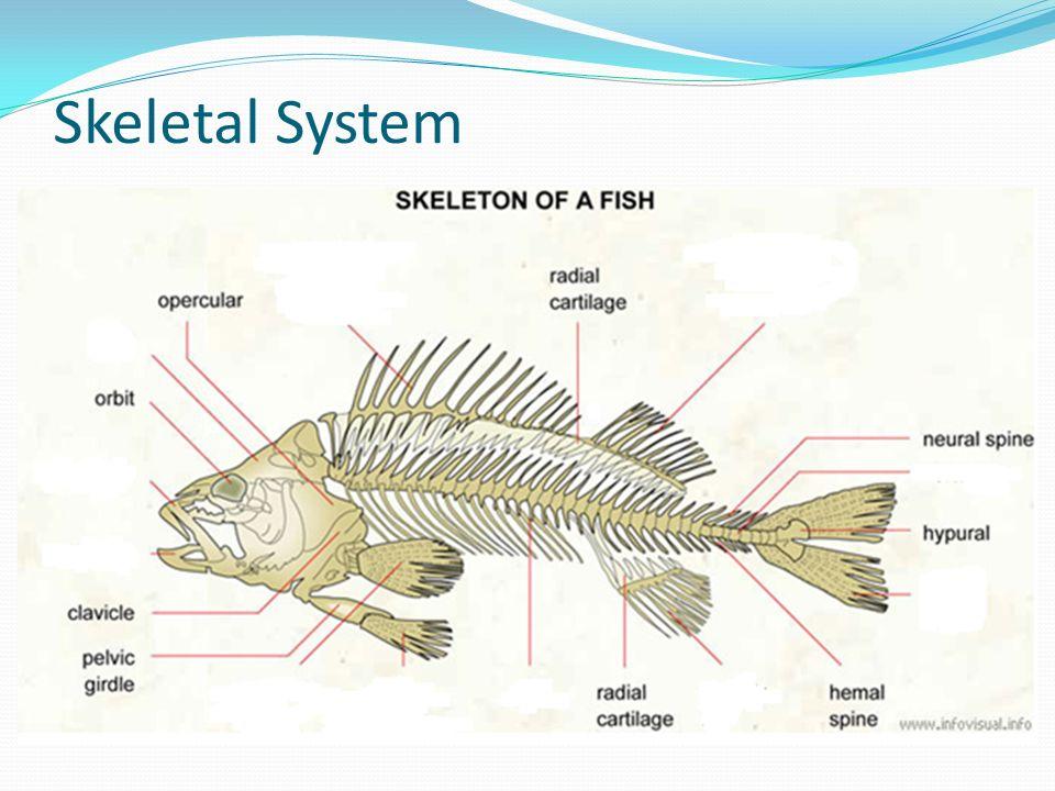 15 skeletal system