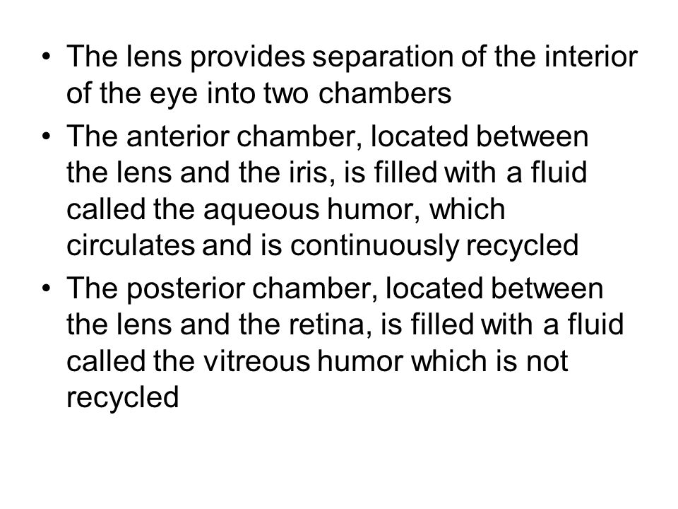 The lens provides separation of the interior of the eye into two chambers