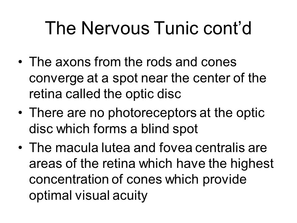 The Nervous Tunic cont'd