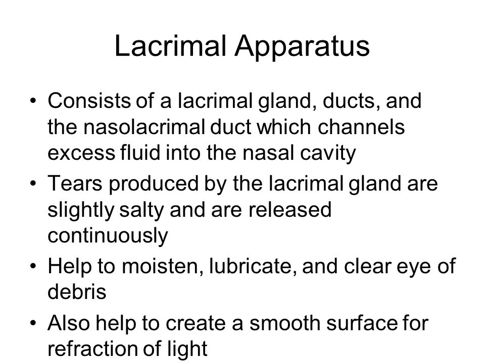 Lacrimal Apparatus Consists of a lacrimal gland, ducts, and the nasolacrimal duct which channels excess fluid into the nasal cavity.