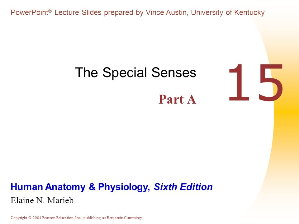 The Special Senses Part A - ppt download
