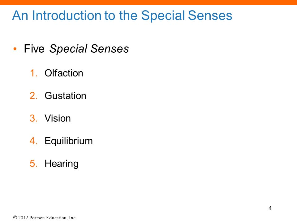 17- Lab The Special Senses. - ppt video online download