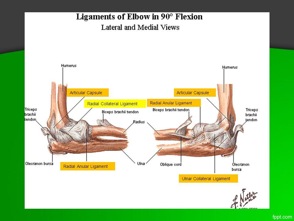 Elbow Joint Nicholas Presho Brianna Saugen Rebecca Snyder Ppt