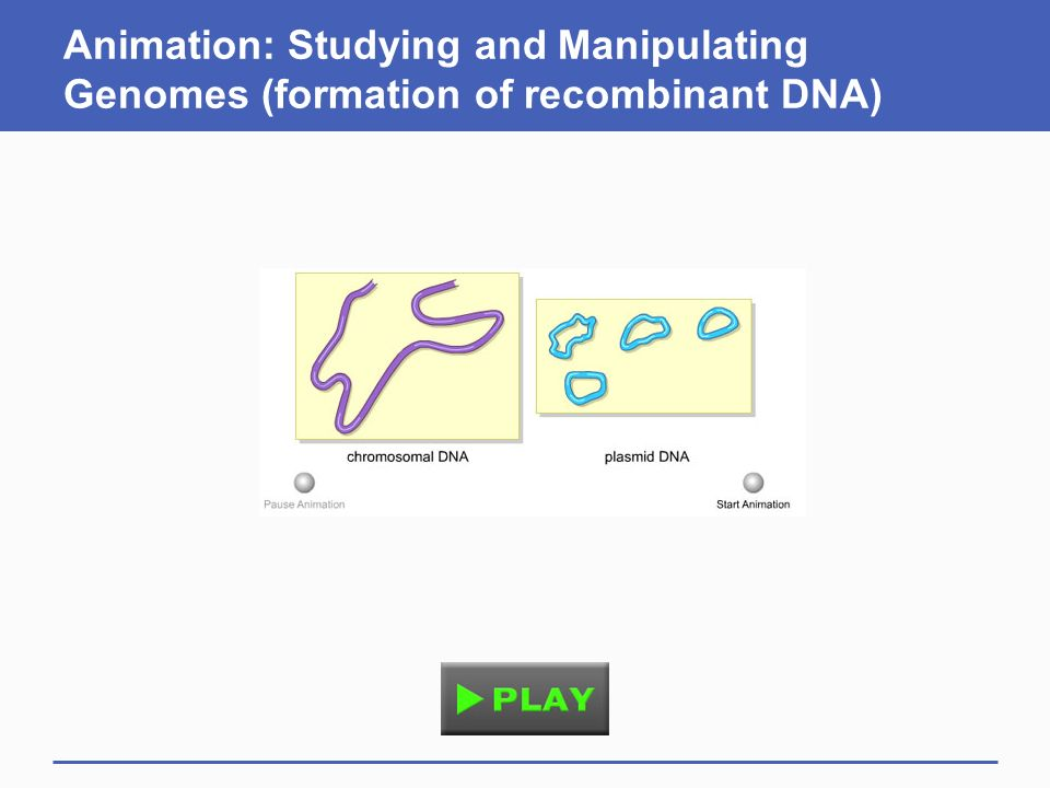 Animation: Studying and Manipulating Genomes (formation of recombinant DNA)