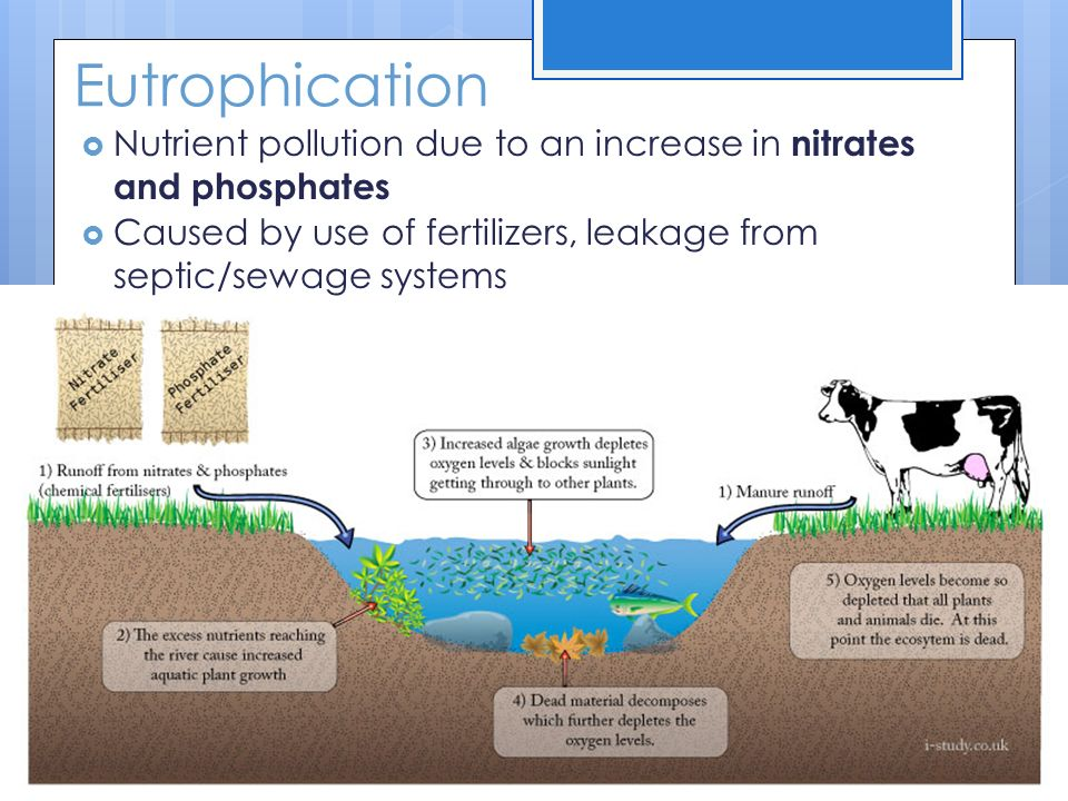 Eutrophication Nutrient pollution due to an increase in nitrates and phosphates.