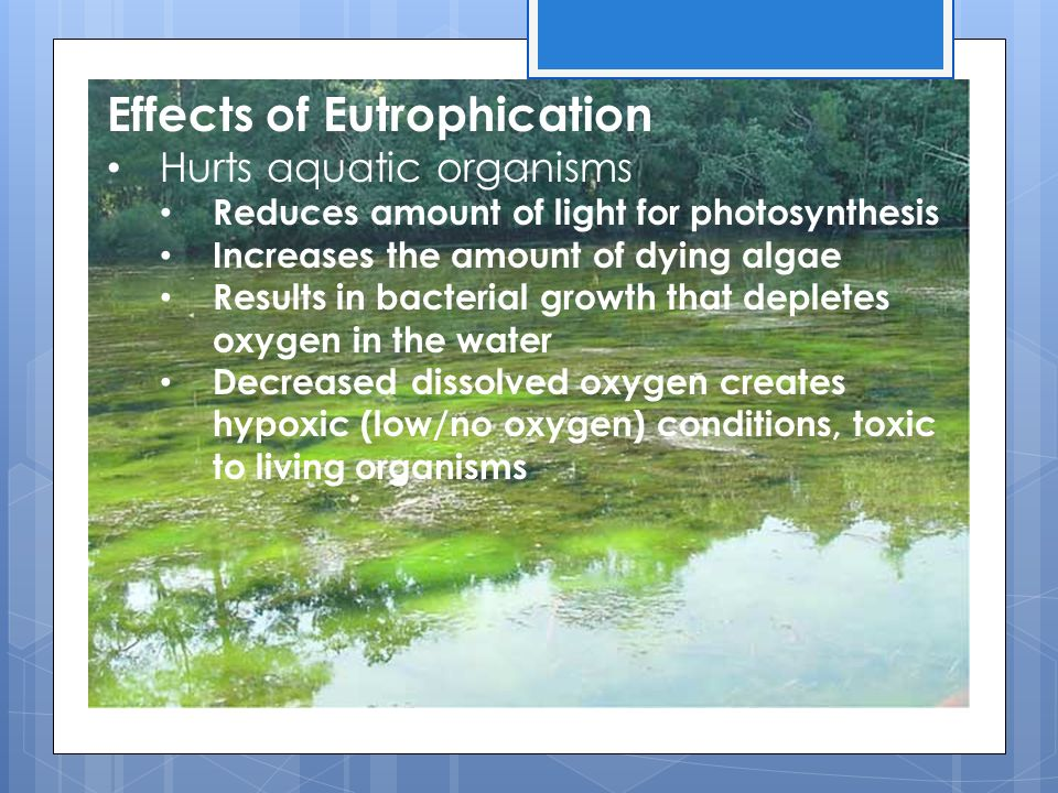 Effects of Eutrophication