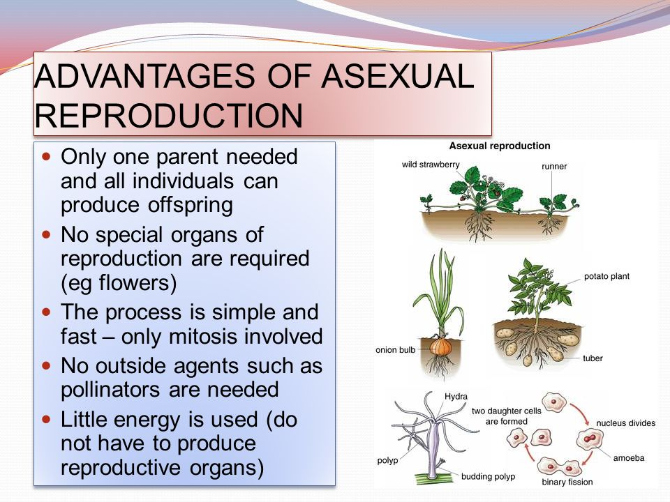 What parts of a flower are involved in asexual reproduction