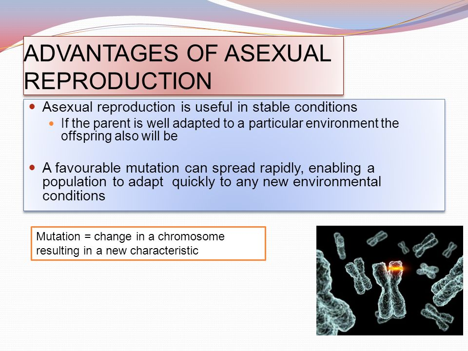 Commercial importance of asexual reproduction