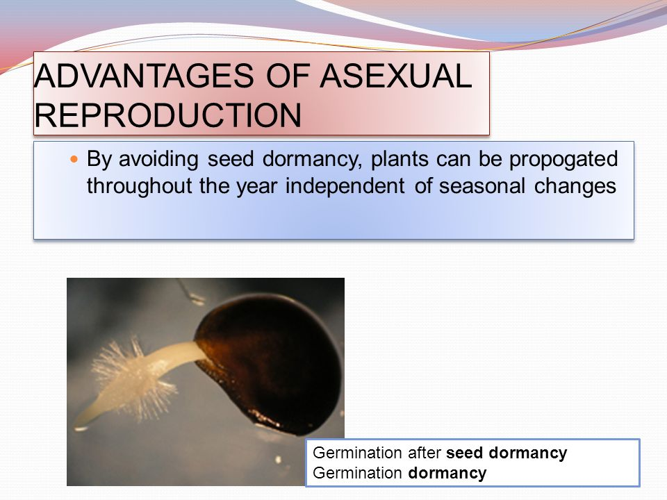 Is germination asexual reproduction advantages