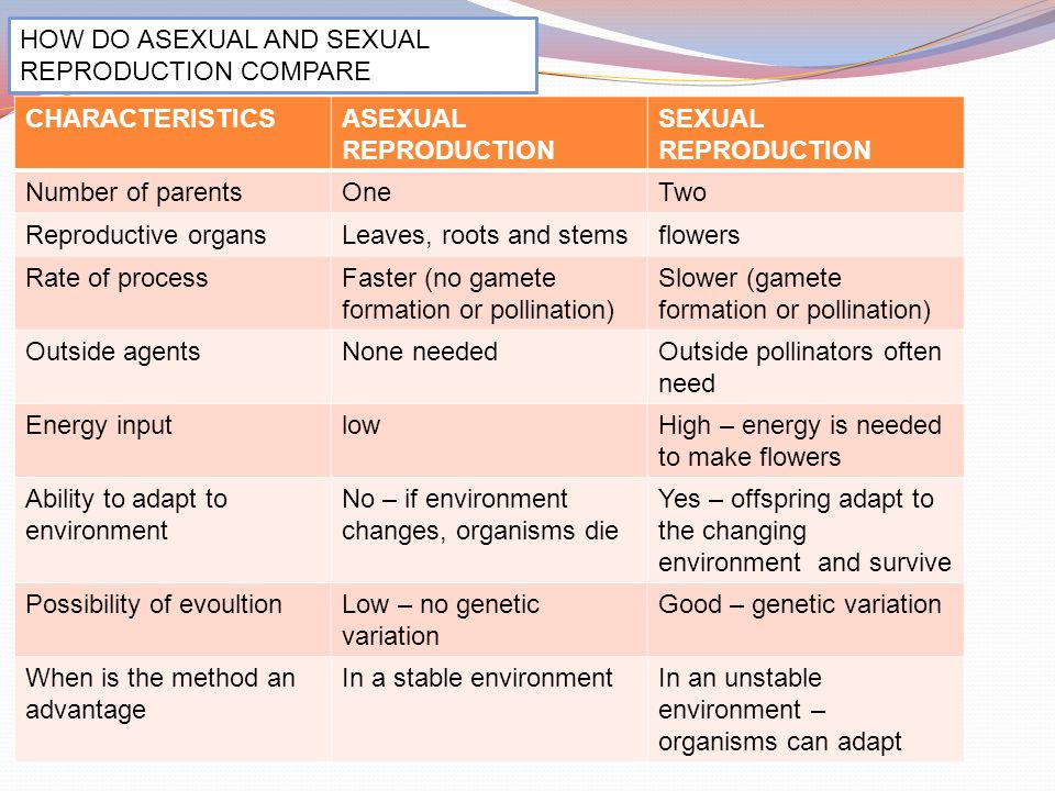 Compare sexual and asexual reproduction pics 53