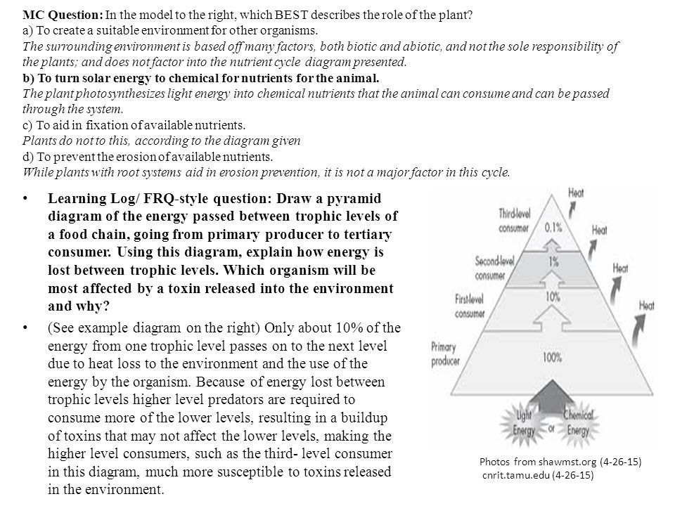 MC Question: In the model to the right, which BEST describes the role of the plant a) To create a suitable environment for other organisms. The surrounding environment is based off many factors, both biotic and abiotic, and not the sole responsibility of the plants; and does not factor into the nutrient cycle diagram presented. b) To turn solar energy to chemical for nutrients for the animal. The plant photosynthesizes light energy into chemical nutrients that the animal can consume and can be passed through the system. c) To aid in fixation of available nutrients. Plants do not to this, according to the diagram given d) To prevent the erosion of available nutrients. While plants with root systems aid in erosion prevention, it is not a major factor in this cycle.
