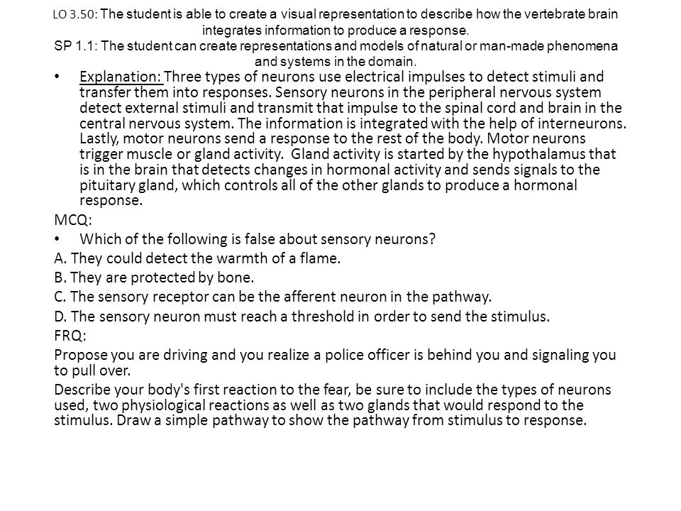 Which of the following is false about sensory neurons