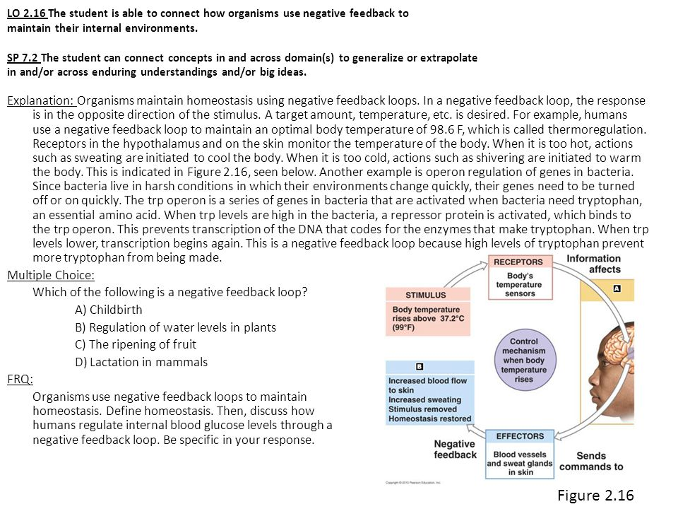 LO 2.16 The student is able to connect how organisms use negative feedback to maintain their internal environments. SP 7.2 The student can connect concepts in and across domain(s) to generalize or extrapolate in and/or across enduring understandings and/or big ideas.