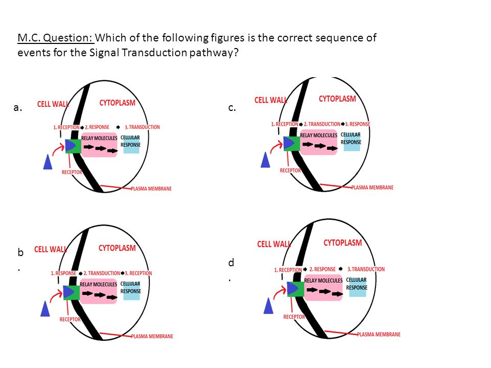 M.C. Question: Which of the following figures is the correct sequence of events for the Signal Transduction pathway