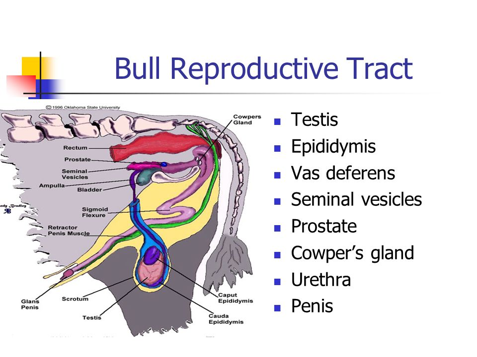 Agr Veterinary Science Ppt Video Online Download