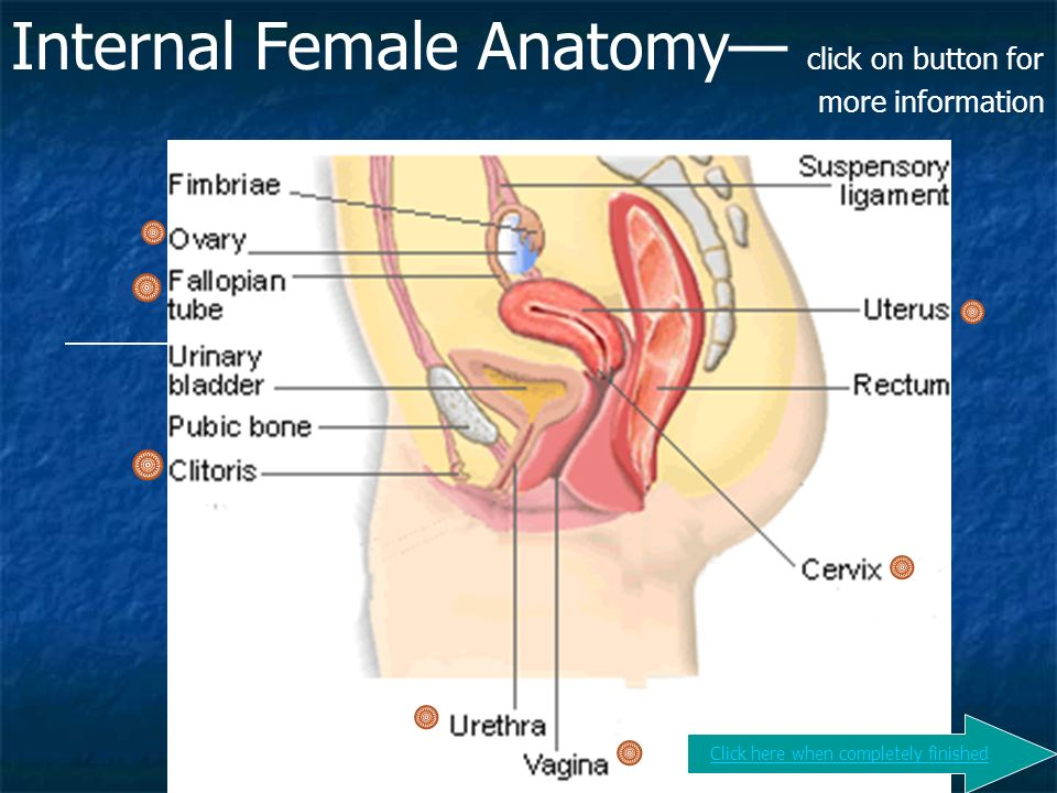 Human Reproduction ♀ ♂. - ppt video online download