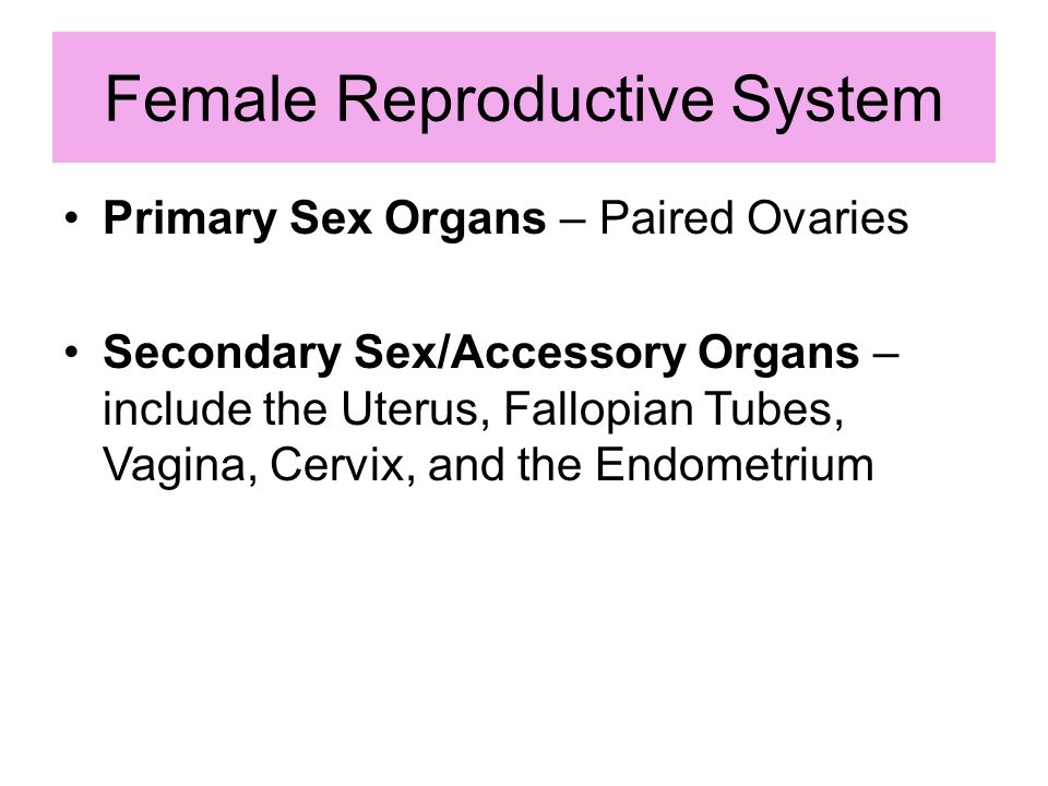 Secondary sex organs