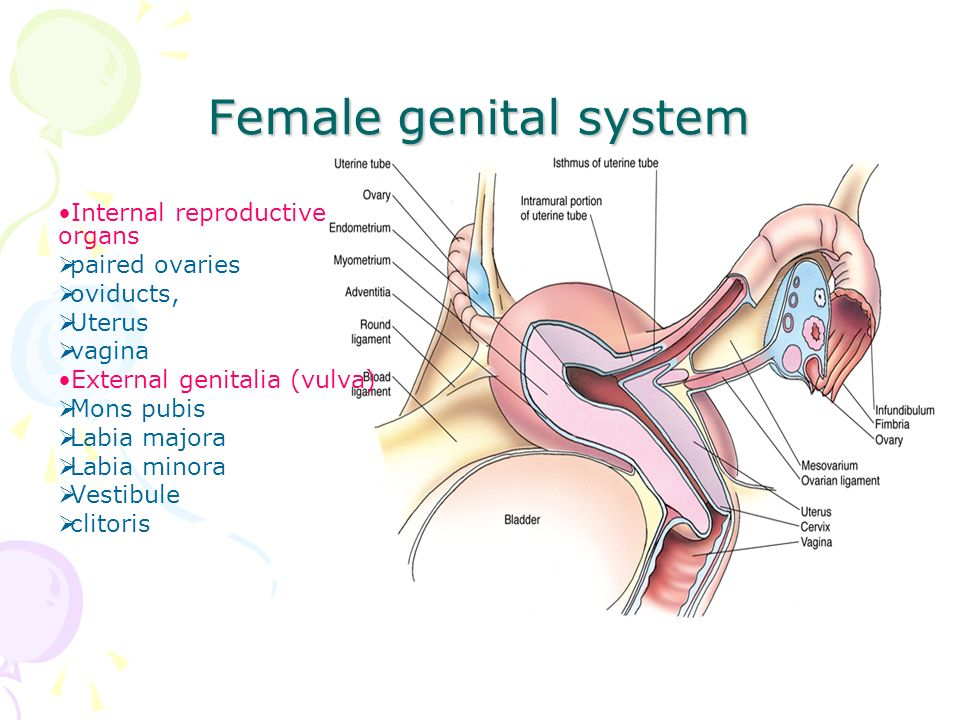 Histology of Female Reproductive System - ppt video online download