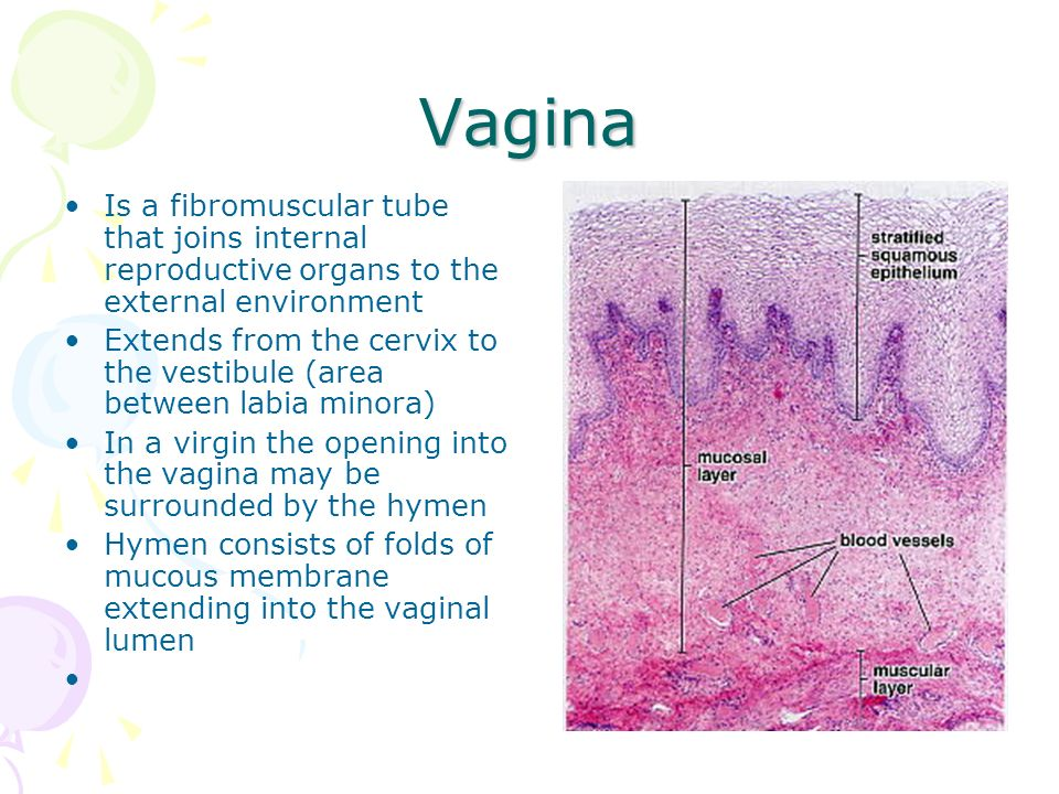 Histology Of Female Reproductive System Ppt Video Online Download