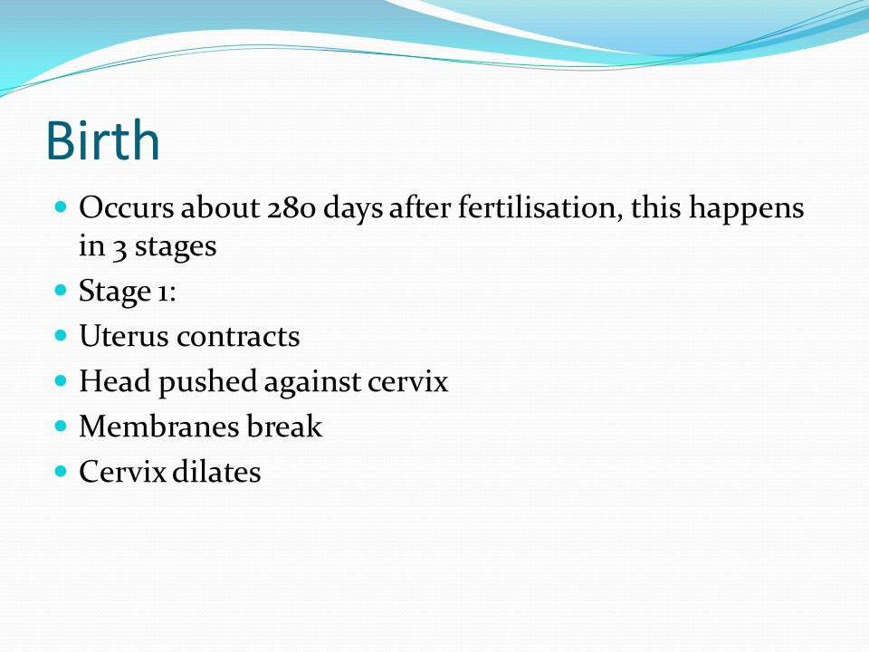 Birth Occurs about 280 days after fertilisation, this happens in 3 stages. Stage 1: Uterus contracts.
