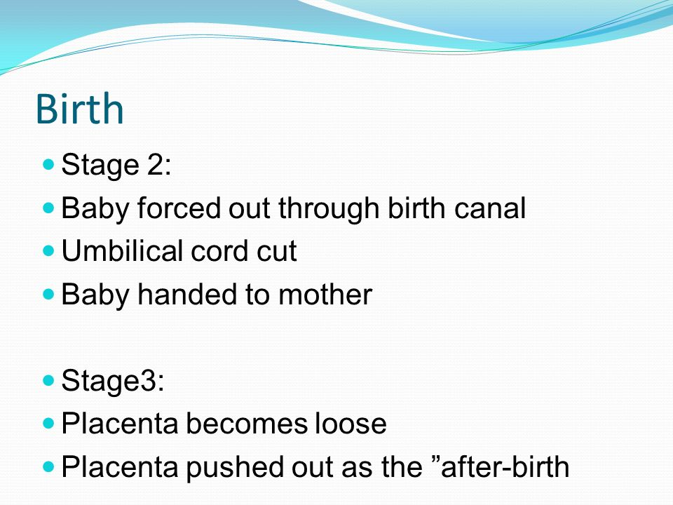 Birth Stage 2: Baby forced out through birth canal Umbilical cord cut