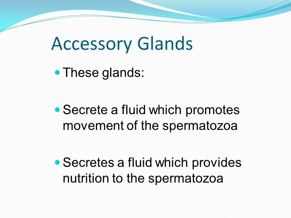 Accessory Glands These glands: