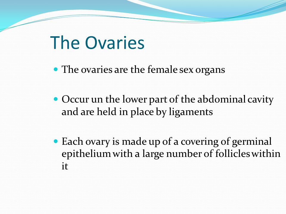The Ovaries The ovaries are the female sex organs