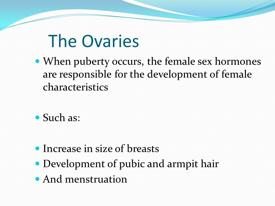The Ovaries When puberty occurs, the female sex hormones are responsible for the development of female characteristics.