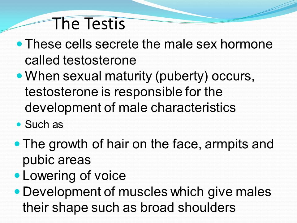 The Testis These cells secrete the male sex hormone called testosterone.