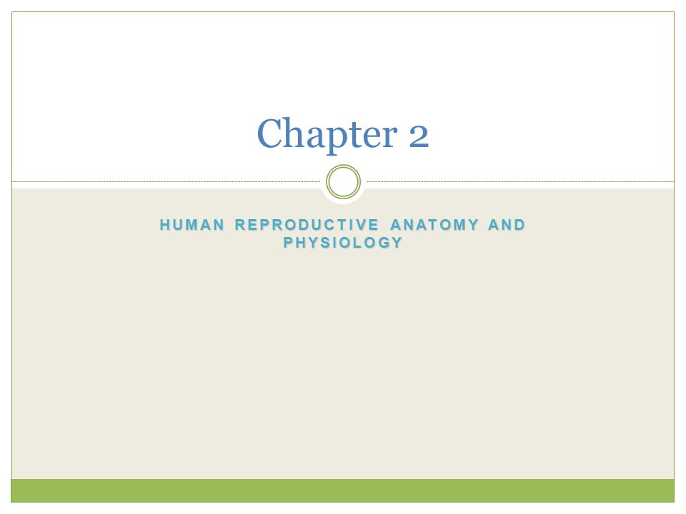 Human Reproductive Anatomy and Physiology - ppt download