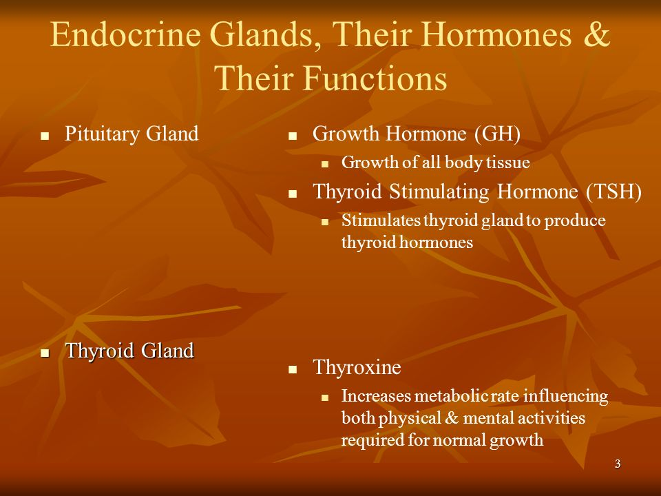 Endocrine Glands, Their Hormones & Their Functions