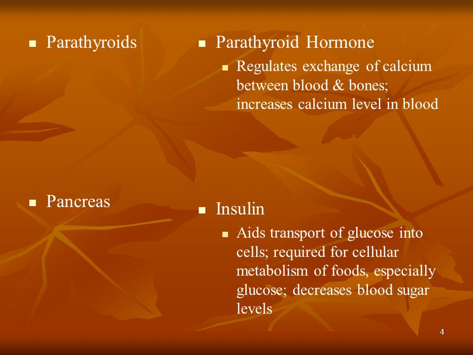 Parathyroids Pancreas Parathyroid Hormone Insulin