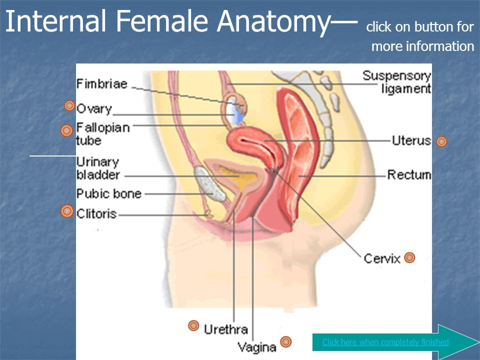 Human Reproduction Ppt Video Online Download