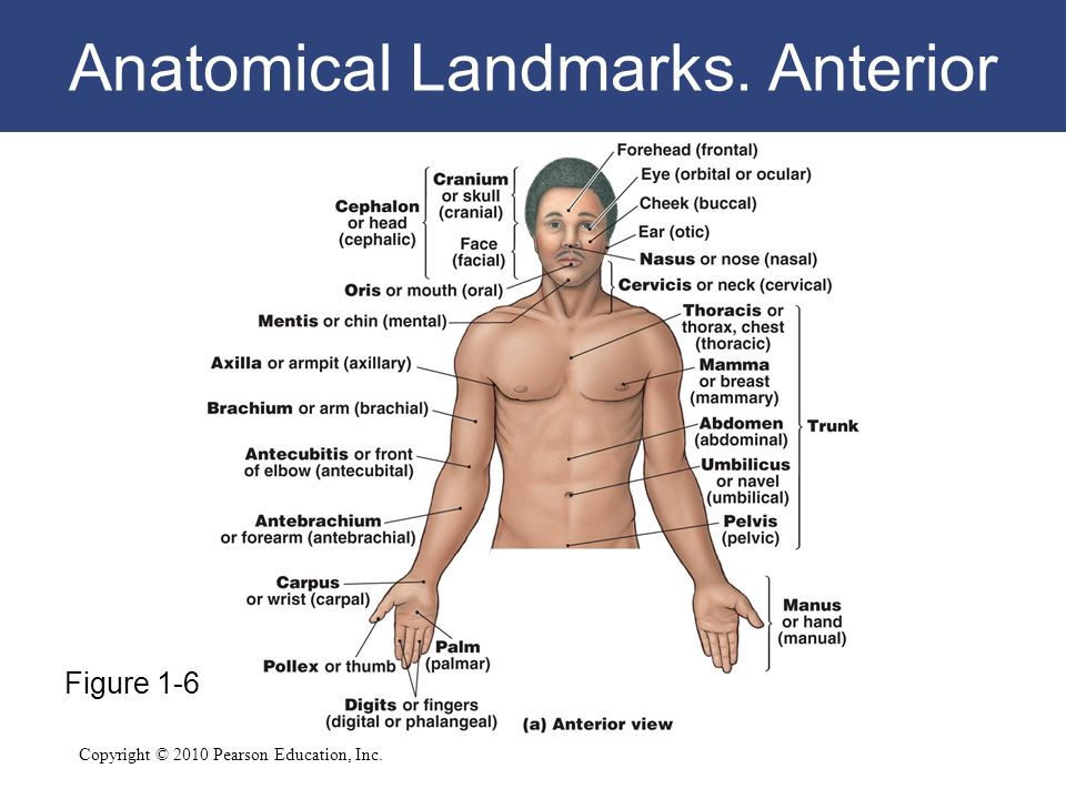 Index php moreover 6331264 also Epithelial Tissues further Visceral Vs Parietal additionally Oedema 53467677. on serous body cavities
