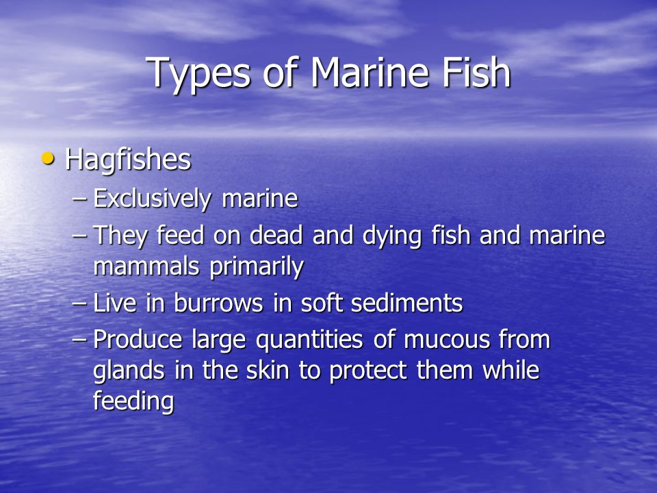 Chapter 8 Marine Fishes  - ppt video online download