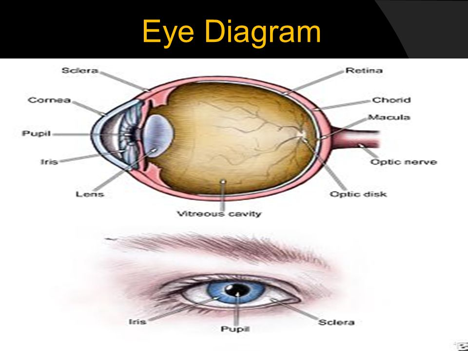 Automated eye pattern recognition systems ppt download 4 eye diagram ccuart Choice Image