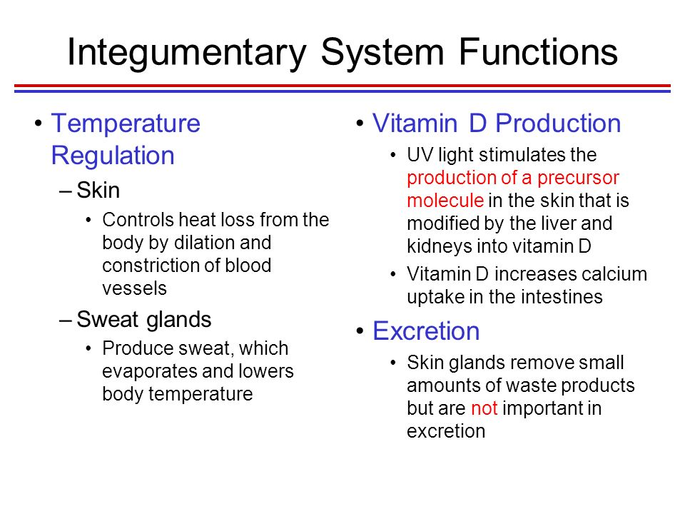 Chapter 5 Integumentary System Ppt Video Online Download